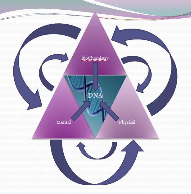 Functional Medicine uses the Triangle of Health Approach
